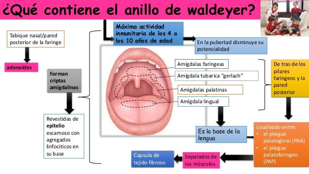 amigdalas palatinas