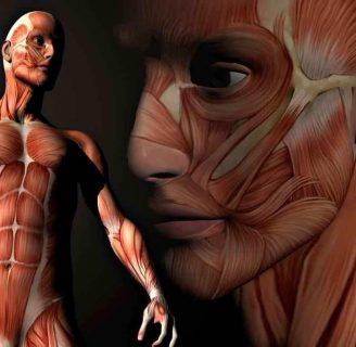 Músculos: ¿Qué son? Anatomía, Funciones, Tipos, Movimiento y mucho más