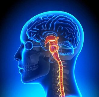 Tallo Cerebral ¿Qué es?, funciones, partes, lesiones, síndromes y más