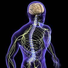 Nervio Glosofaríngeo: ¿qué es?, función, lesiones, patologías y más