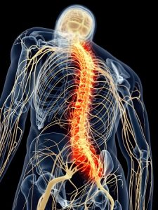 médula espinal 10