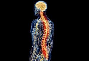 médula espinal 11