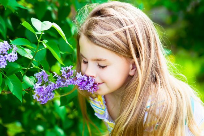 El olfato: ¿qué es? Importancia, función, partes, localización y mucho más