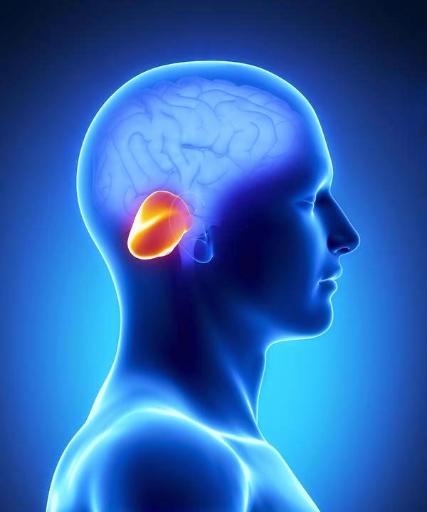Enfermedades del cerebelo