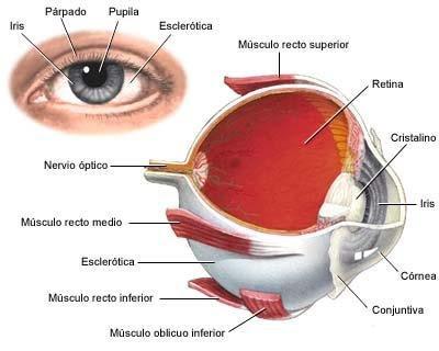 Qué es el ojo