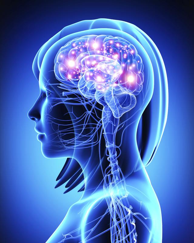 Diferencias entre el Sistema nervioso somático y autónomo: