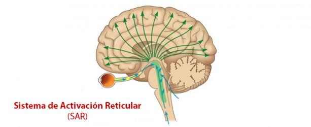 activación reticular