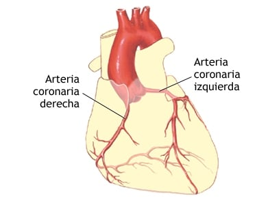 arteria coronaria
