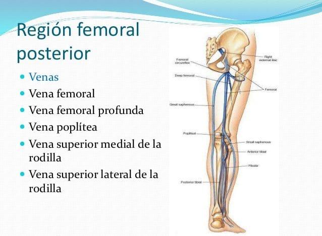 arteria femoral
