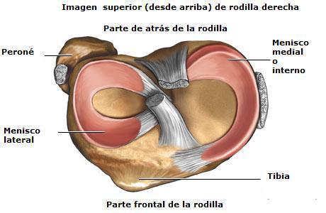 Los meniscos de la rodilla