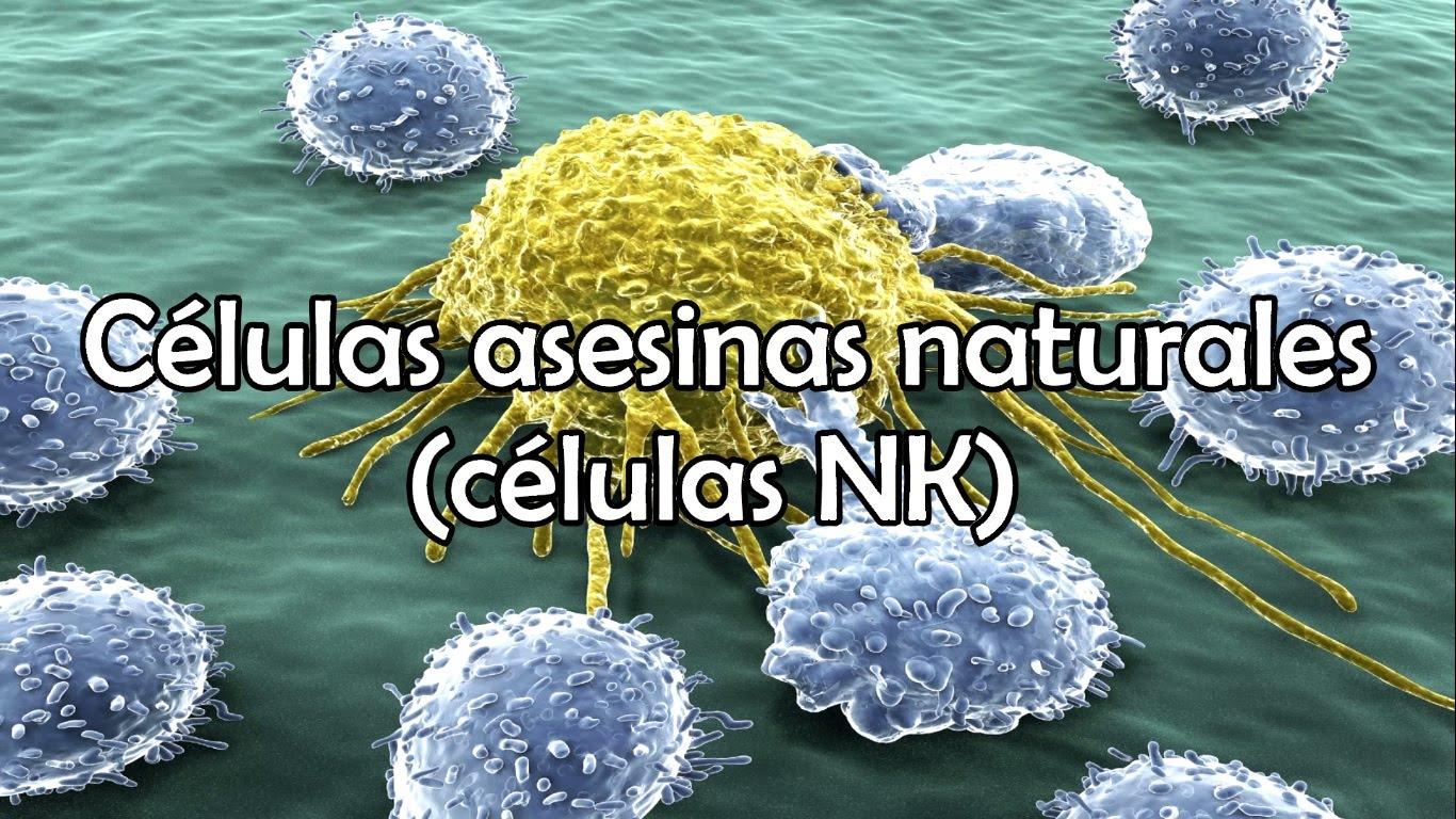 Células NK
