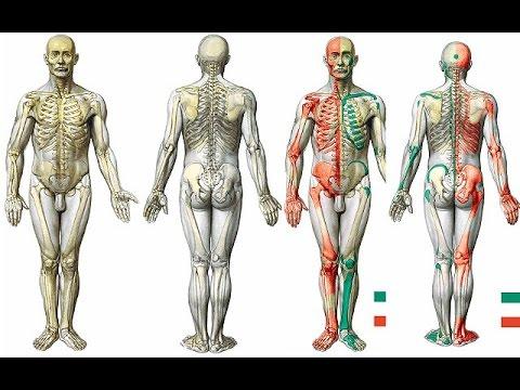 sistema osteoarticular