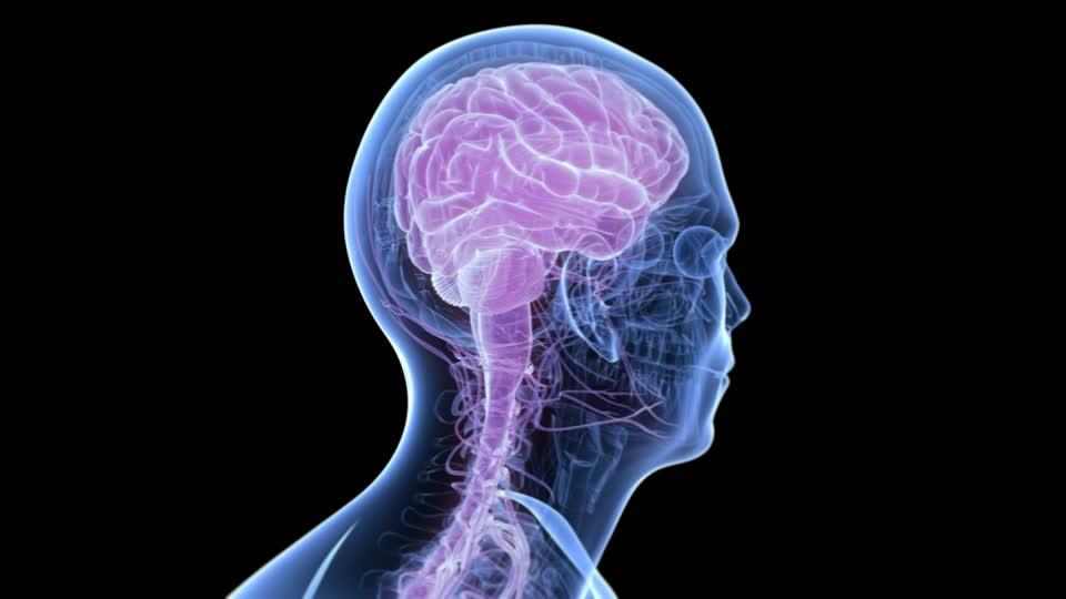 ver-Sistema Nervioso Central-0