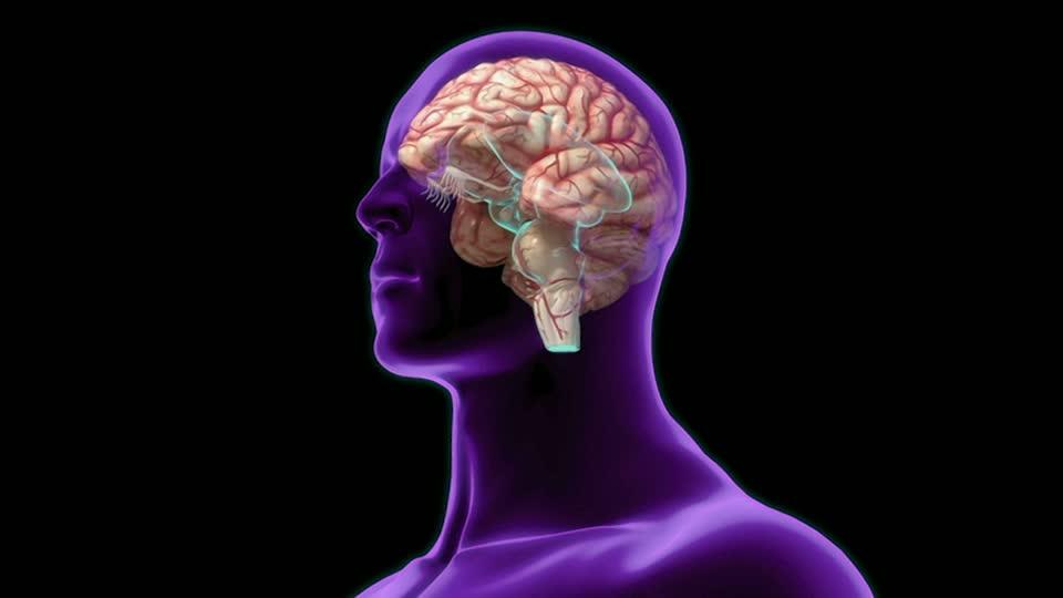 ver-Sistema Nervioso Central-1