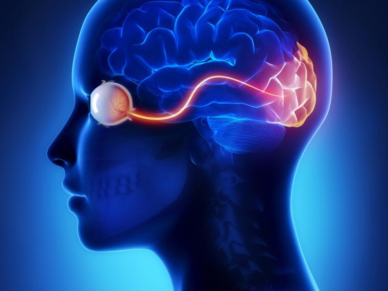 ver-Sistema Nervioso Central-11