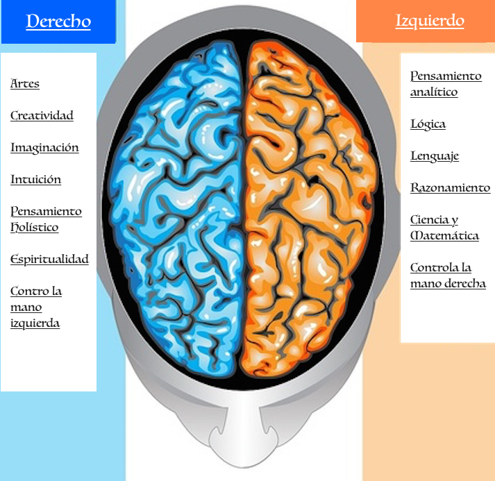 ver-Sistema Nervioso Central-13