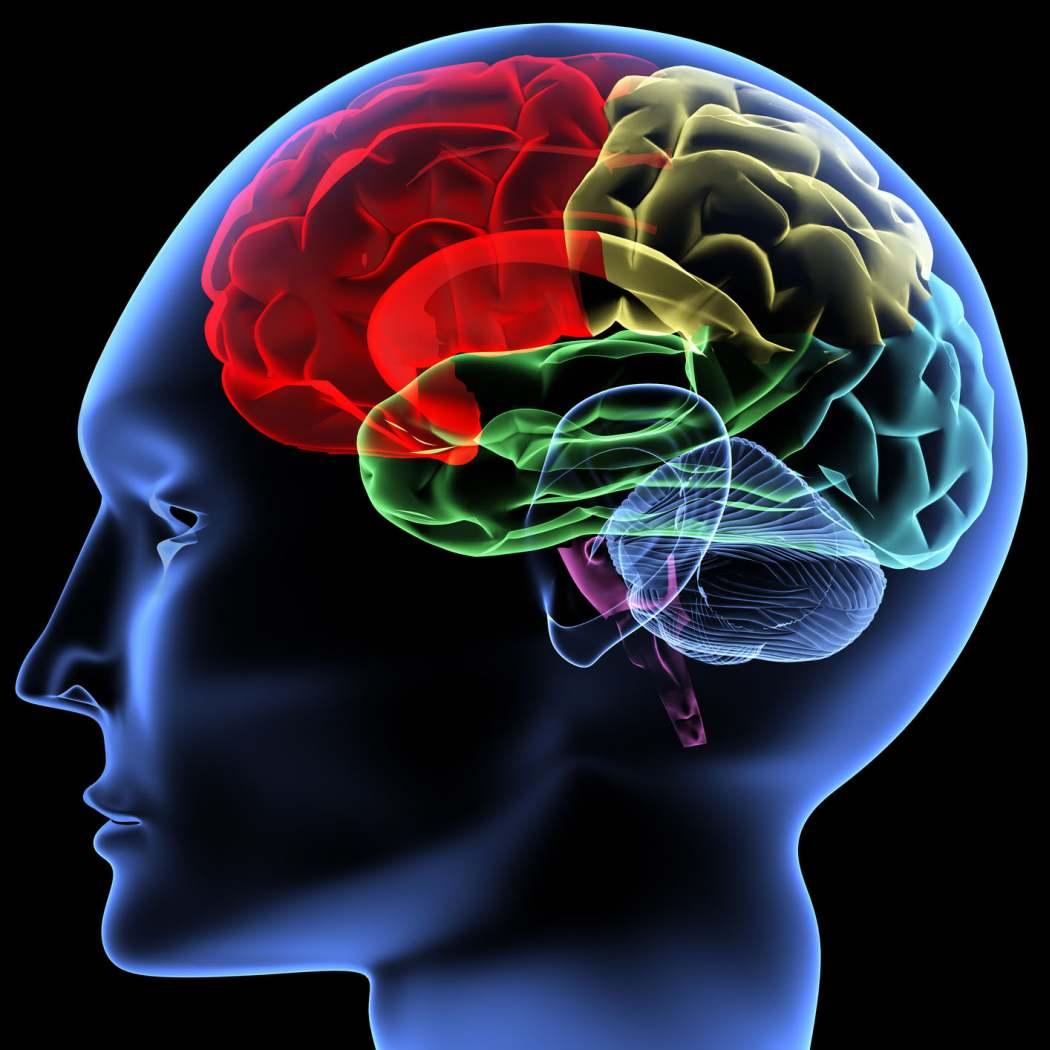 ver-Sistema-Nervioso-Central-16