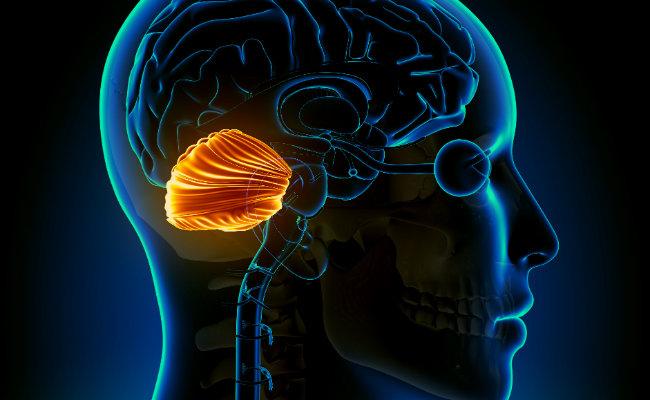 ver-Sistema Nervioso Central-20