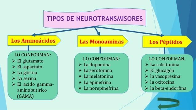 ver-Sistema Nervioso Central-34