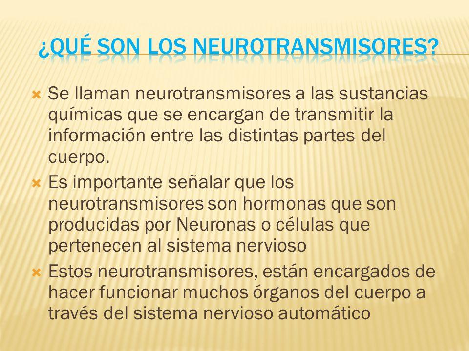 ver-Sistema Nervioso Central-36