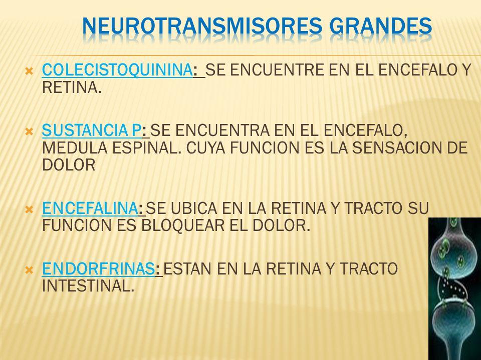 ver-Sistema Nervioso Central-37