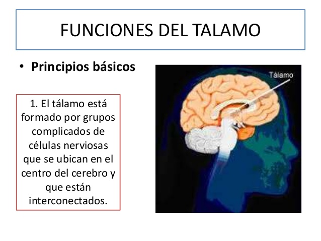 ver-Sistema Nervioso Central-39