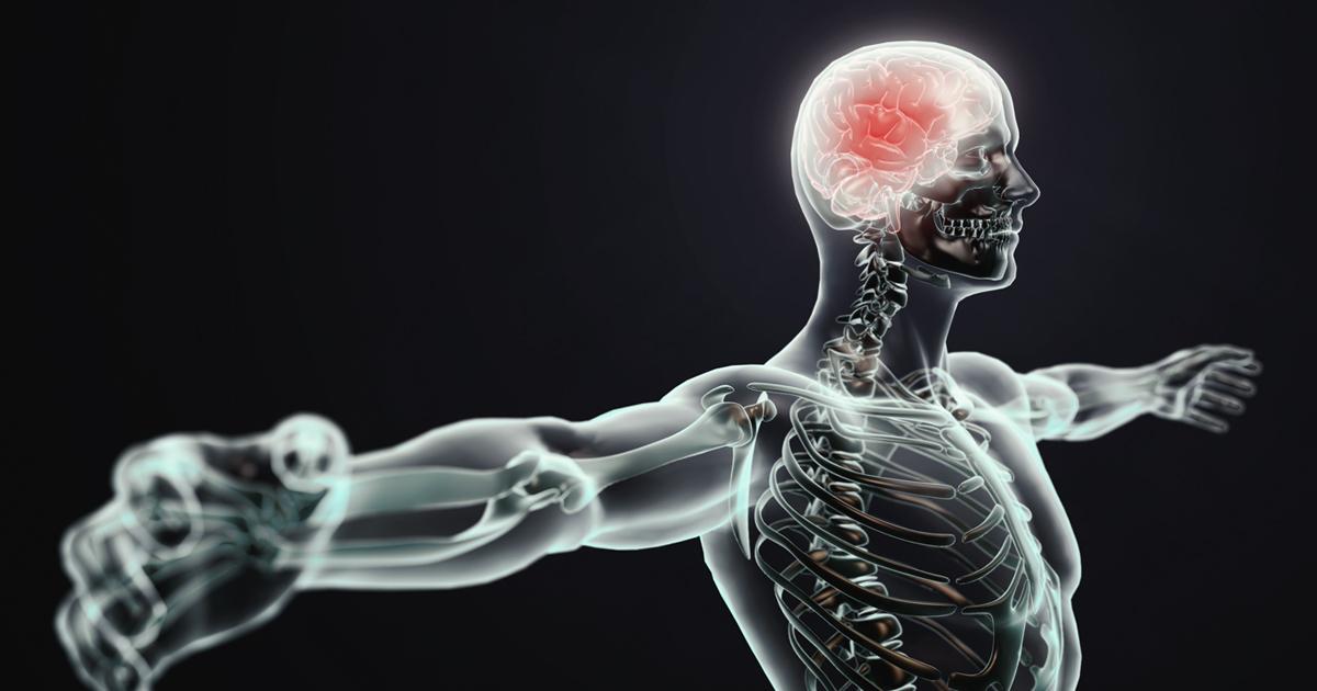 ver-Sistema Nervioso Central-5
