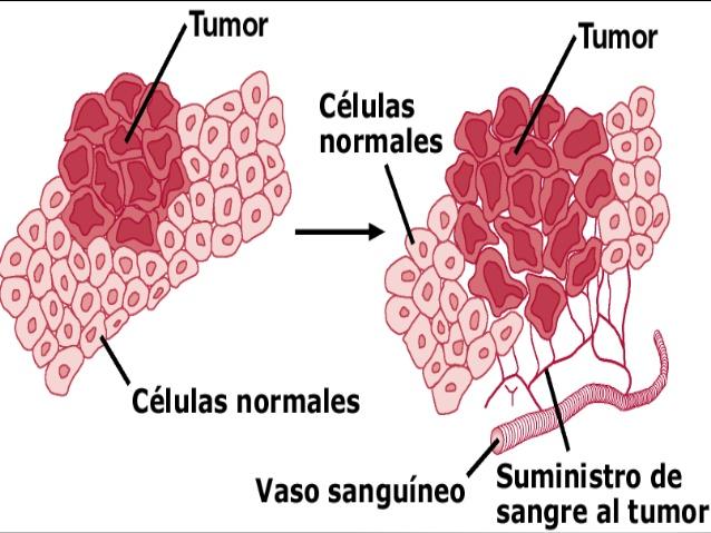 ver-Sistema Nervioso Central-57