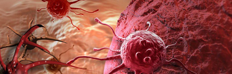ver-Sistema Nervioso Central-59