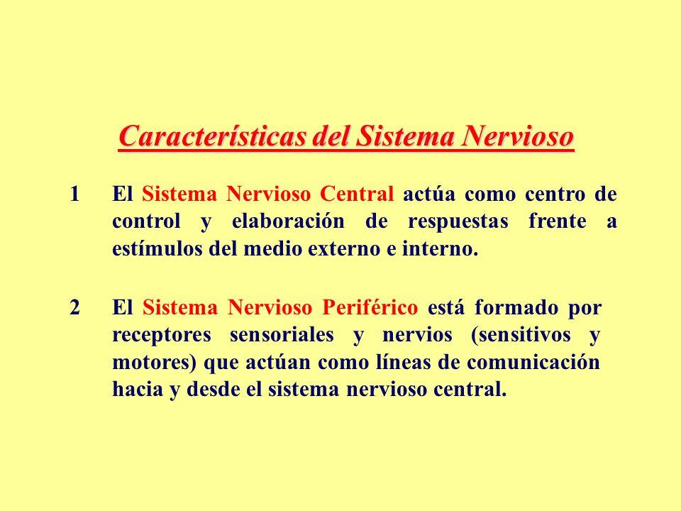 ver-Sistema Nervioso Central-6