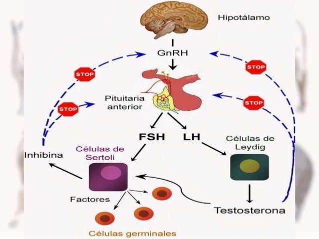Hormonas gnrh