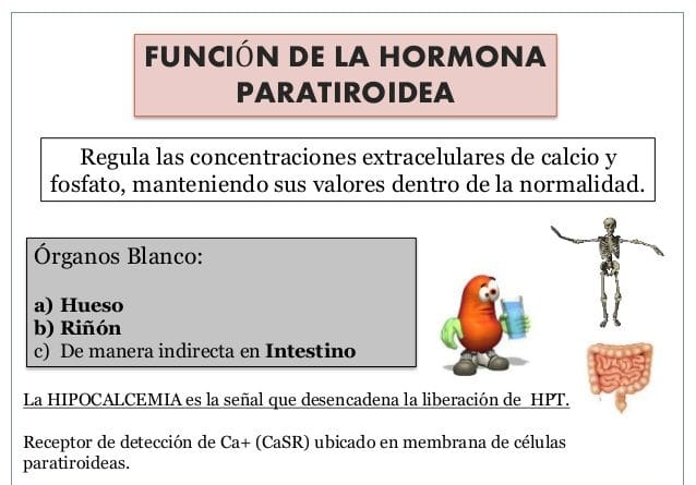 hormonas paratiroideas