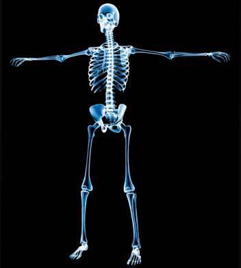 ¿Sabe cuántos huesos tiene el cuerpo humano?