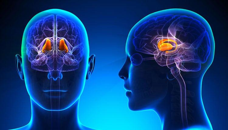 hormonas del hipotálamo