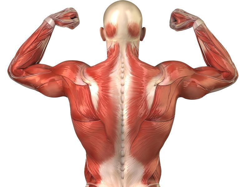 Músculos atrofiados