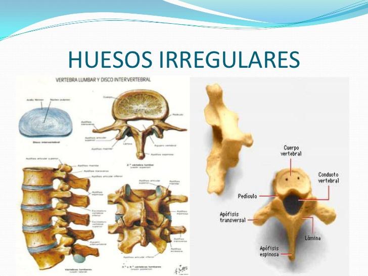 Huesos irregulares