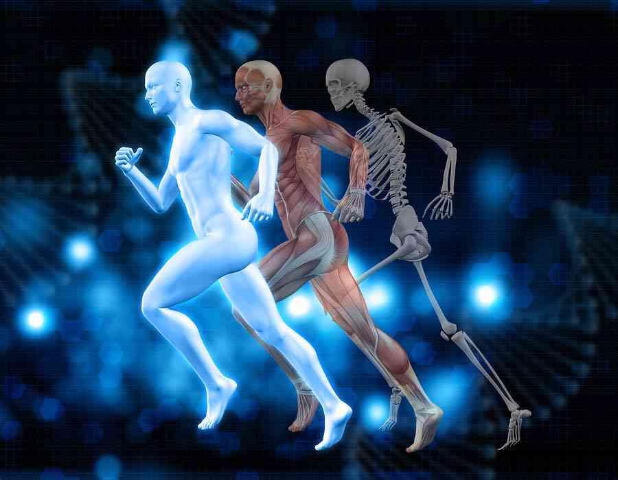 sistema músulo esquelétio