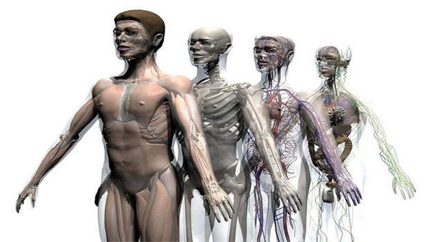 Sistema Músculo Esquelético: ¿Qué es? Anatomía, función, fisiología y mucho más