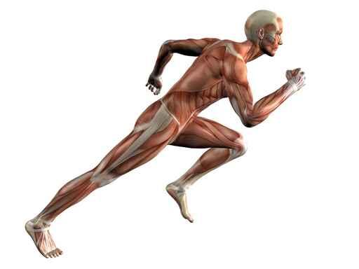 Tipos de contracción muscular-1