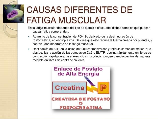 Tipos de contracción muscular-13