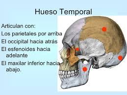 Huesos maxilares-9