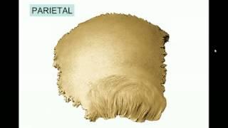 Huesos maxilares-12