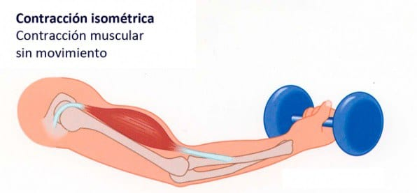 Tipos de contracción muscular-3