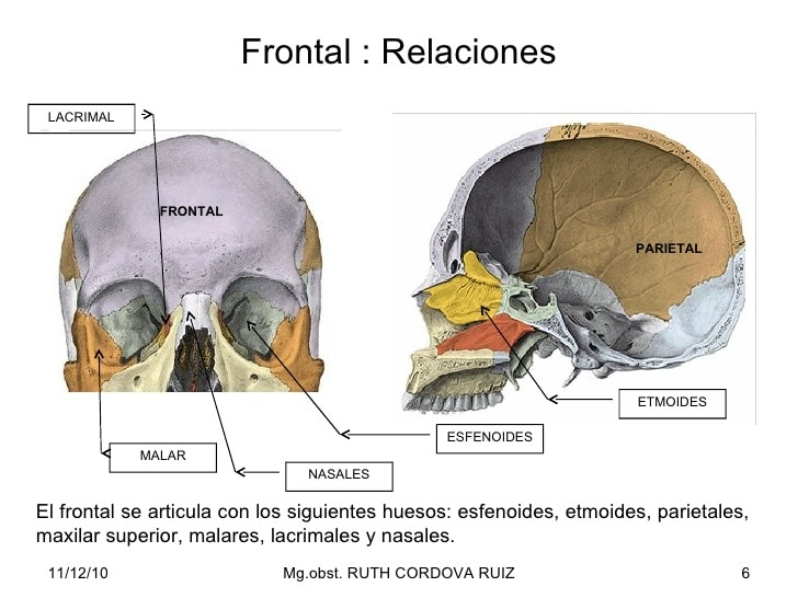 Huesos maxilares-4