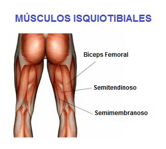 Músculos De La Pierna Anatomía Función Partes Origen E Inserción Mucho Más