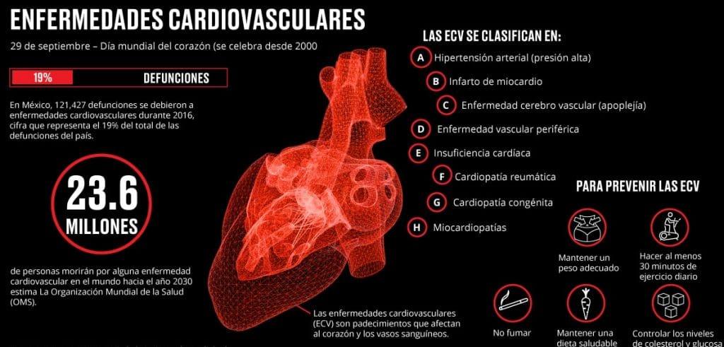 Musculos Cardiacos
