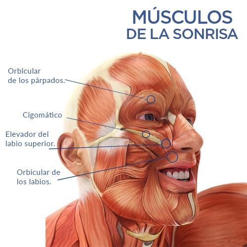 músculos de la sonrisa
