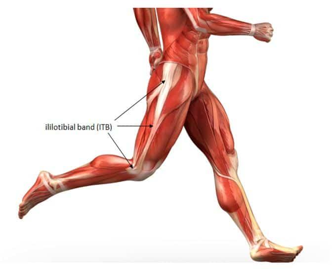Músculos De La Pierna: Anatomía, Funcion, Partes, Origen e Inserción Mucho Más