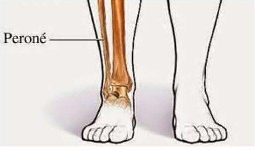 El Tobillo Qué Es Anatomía Función Partes Dolor Y