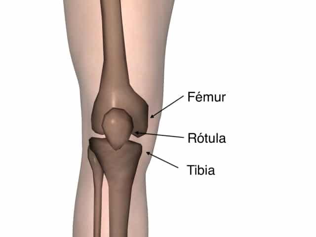 Huesos de la Rodilla